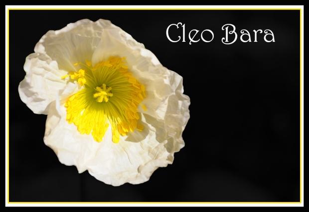 Cleo Bara